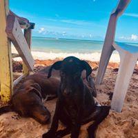 Help the Punta Cana Beach Dogs