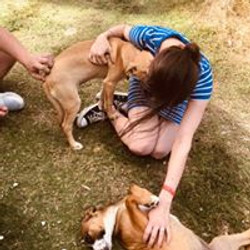 Feed the Punta Cana Street Dogs