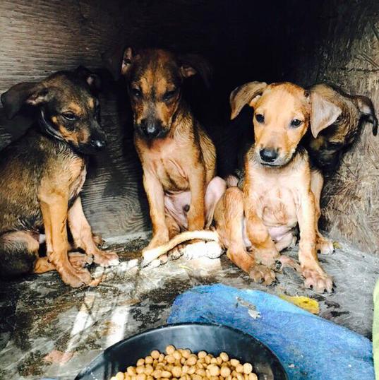 Hungry Puppys