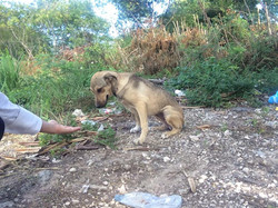 Feed homeless Animals in Punta Cana
