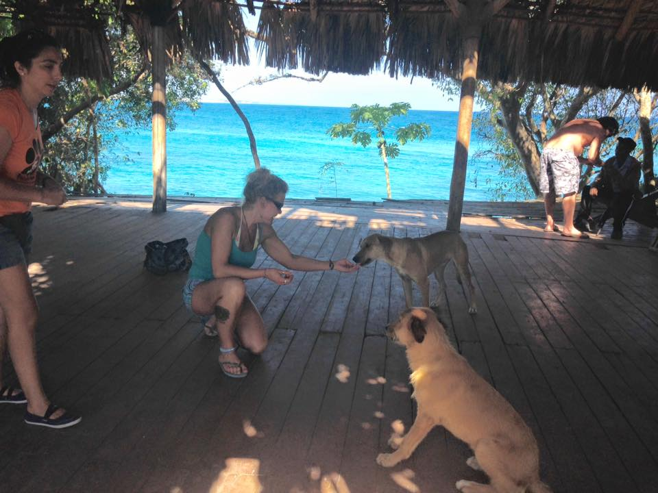 Help Punta Cana Animals