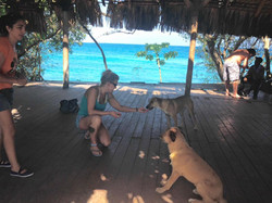 Help Punta Cana Animals