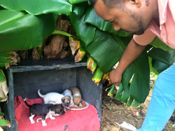 Help Street Dogs and Cats Punta Cana