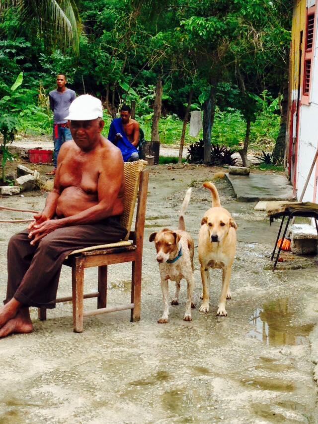 Homeless Animals in Punta Cana