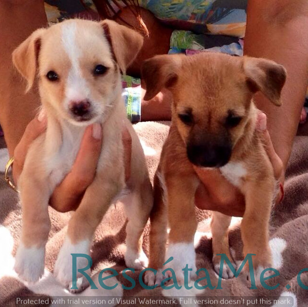 Puppy Babys for adoption