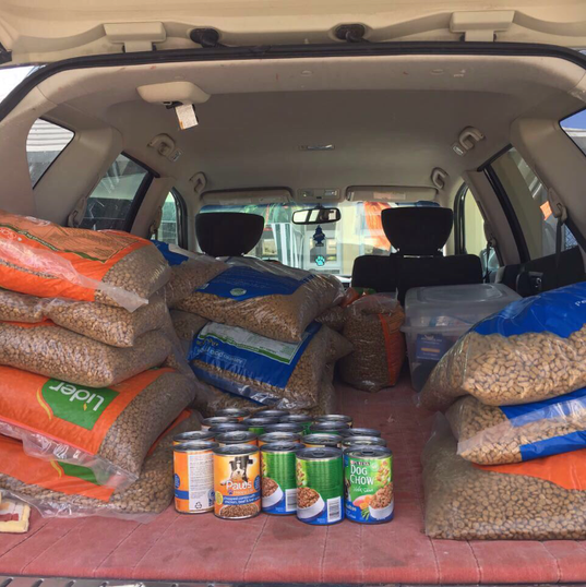 Trunk full of food- Saturday feed