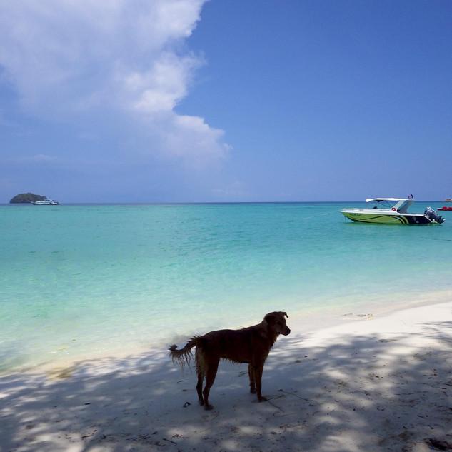 Beach Dog Punta Cana