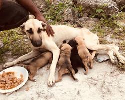 Animal Help Dog Feed