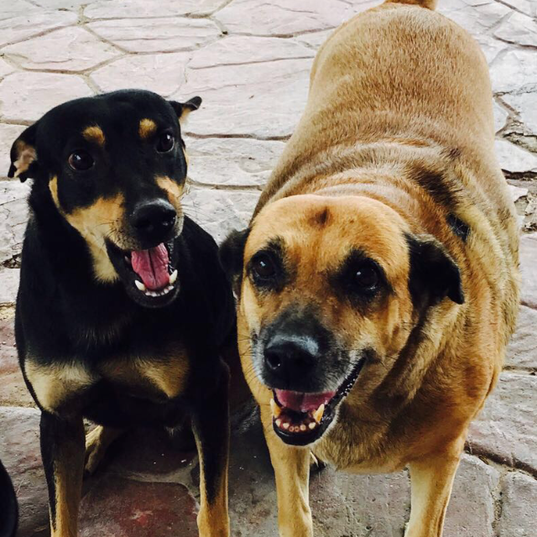 Happy Street Dogs