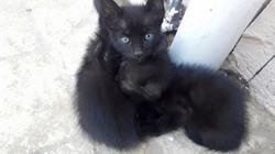 Feed the Street Kittens Punta Cana