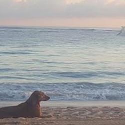 Feed the Homeless Animals Punta Cana