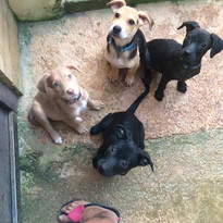 We want a new family- adopt us!