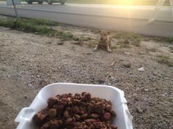Help Punta Cana Homeless Animals
