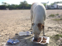 Animal Help Punta Cana