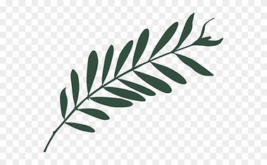 313-3138827_olive-leaf.png