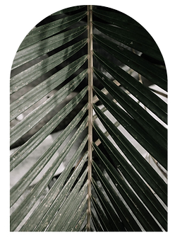 palm-arch-frame_edited.png