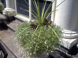 Irsay pool planters2