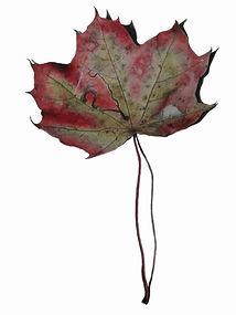 herfstblad.jpg