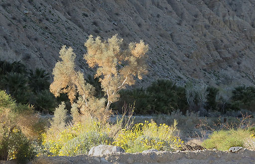 Late afternoon along 1000 Palm Road.jpg