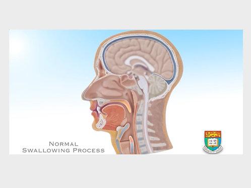 正常吞嚥過程 Normal swallowing process