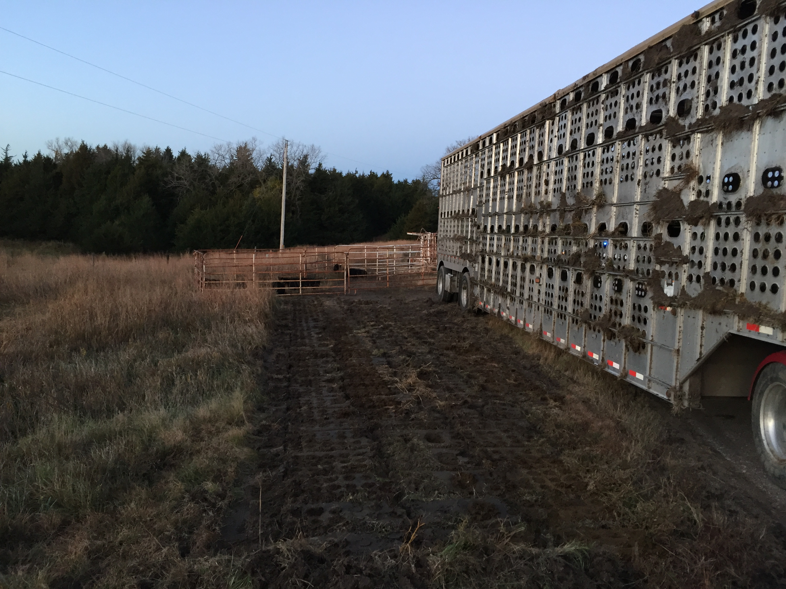 South Dakota Bullrack