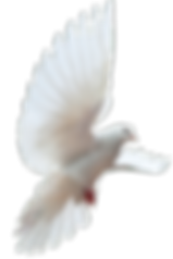 dove-png-5.png