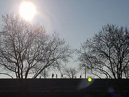 Dakpark silhouet.jpg