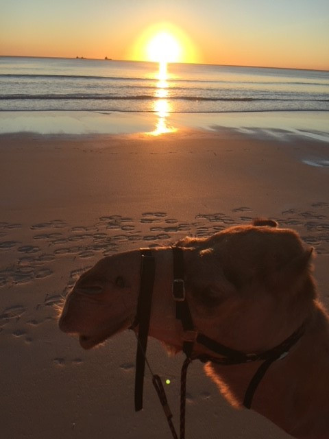 Sunset Camel Ride - Broome