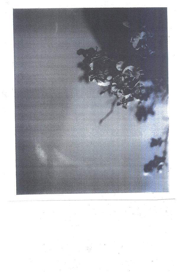 PhotoCopyScan40x61 (1).jpg