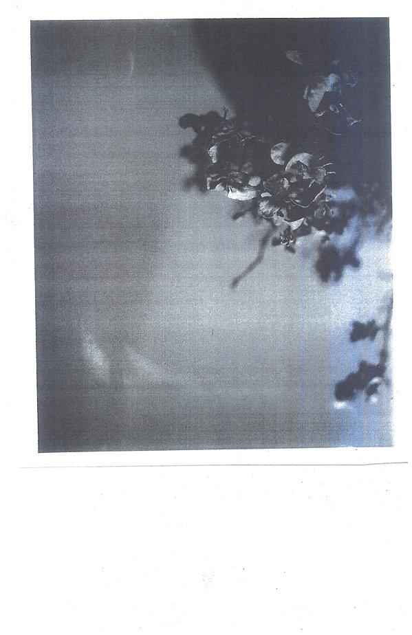 PhotoCopyScan40x61.jpg