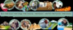website timeline at a glance.png
