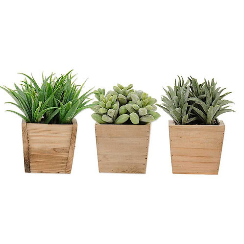 Assorted Succulents in Square Wood Pots Set