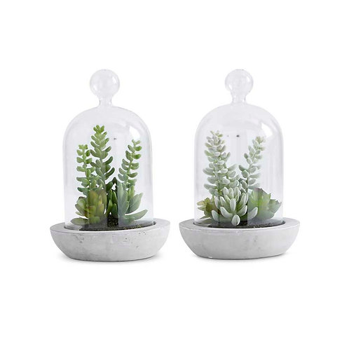 Assorted Succulents in Glass Domes