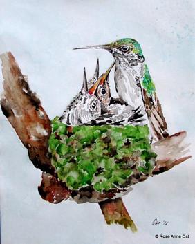 Hummingbird and Chicks