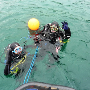 Another First Sea Dive
