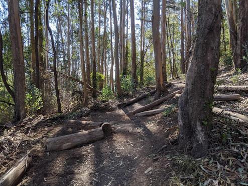 Ridge Trail Day 2019