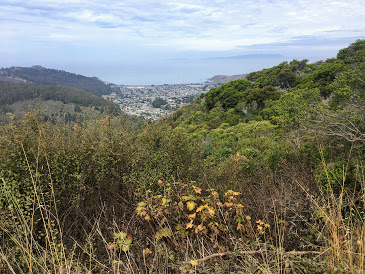 Trip Report: October Plant Walk – San Pedro Valley County Park