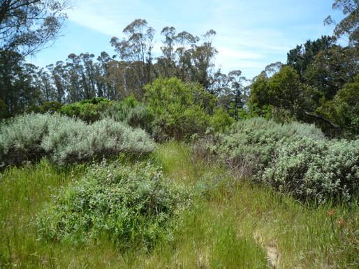 An Easy Under 2-mile Loop through Mount Sutro