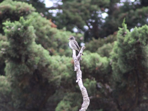 Sutro Bird Watcher: Changing Seasons