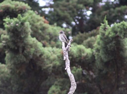 Sutro Bird Watcher: Changing Seasons