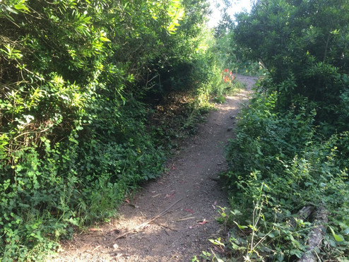 North Ridge Trail Improvements!