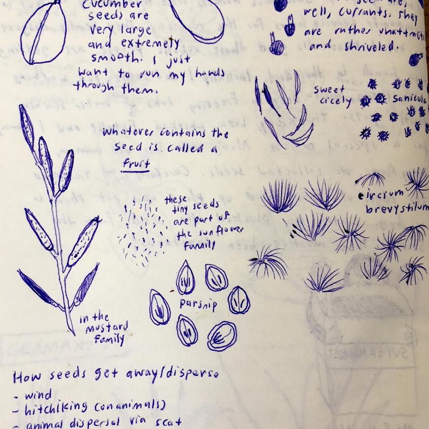 Journaling - by Eva Whitney