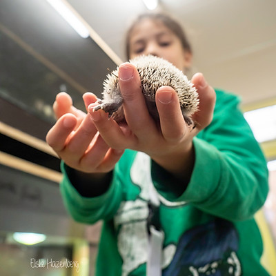 Almere Jungle dieren verzorging