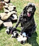 Lily & Pups 6.JPG