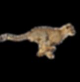 Gepard_Standorte.png