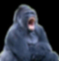 Gorilla_Kontaktformular.png