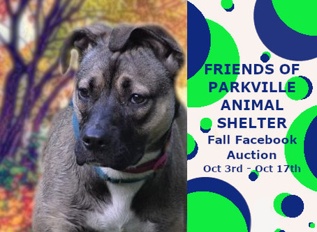 Fall Facebook Auction!