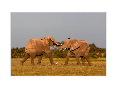 Duo d'éléphants