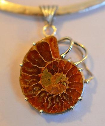Ammonite con tentáculos