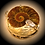 Thumbnail: Ammonite pluma